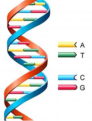 日本RNA学会 - <走馬灯の逆廻しエッセイ> 第17話 「DNAの謎解明へ ...